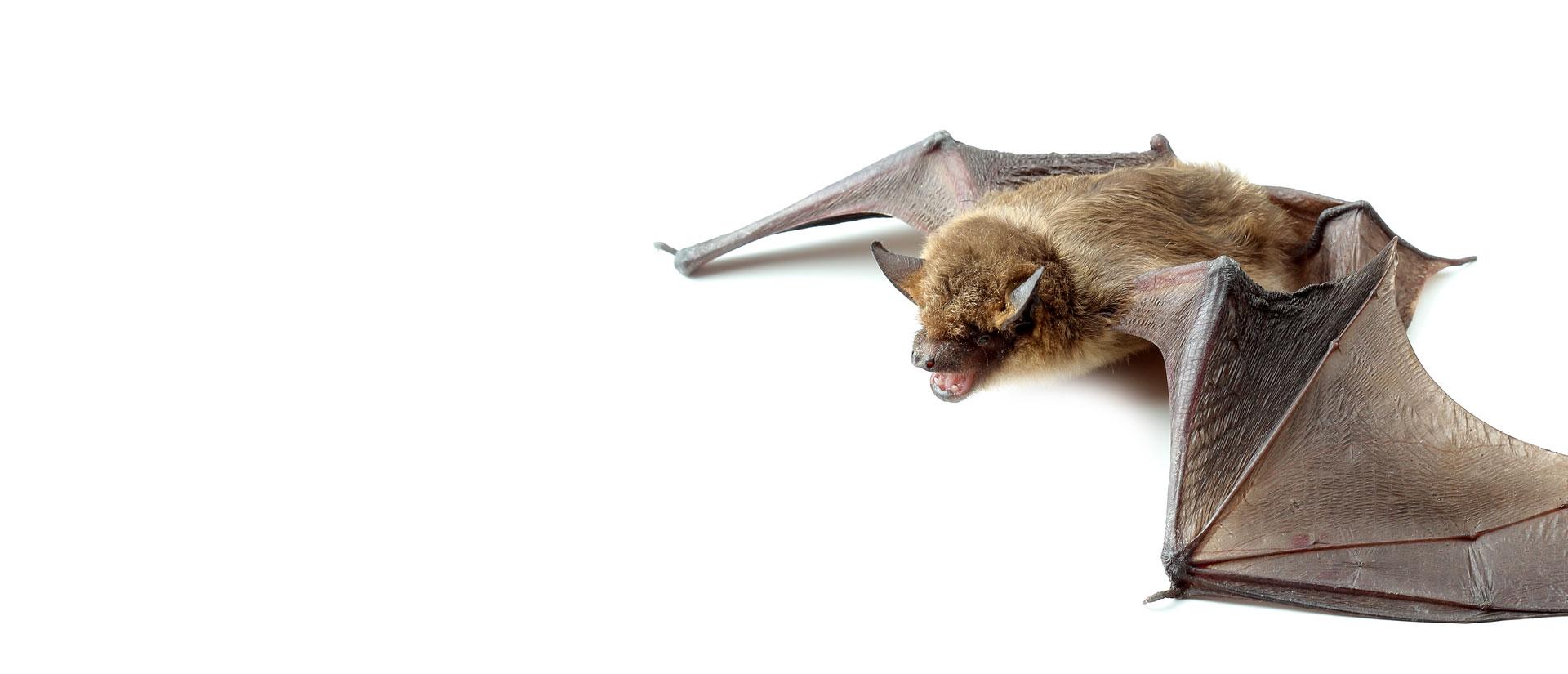 bat control ottawa-gatineau